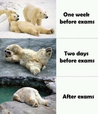 Finals week level: polar bear.